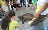 重達53斤的超大甲魚被好心人高價購買放生,圍觀群眾紛紛拍手稱讚