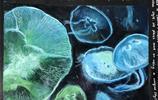 水母作品圖集