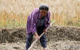 農村奇怪現象,60歲老人外出打工,70歲老人要下地幹活,看了心酸