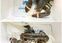 菜譜:奶香芝士焗龍蝦