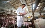 80後大學生逃離北上廣,回鄉當起豬倌,帶鄉親年入80萬