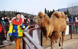 山東青島 動物巡遊過大年