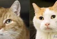 2只貓咪相伴多年,被分開後茶飯不思,女子的做法真是善解貓意