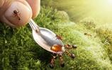 動物世界,螞蟻王國的夢想世界,小螞蟻!