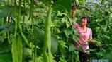 河北唐山建立果蔬等特色產業生產基地 帶動農民增收致富