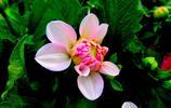 微距攝影——大棚花卉
