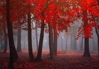 晚秋,多少往事飄散在風中