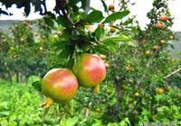 果農必備這篇文章!選肥料必須注意的四個關鍵點!