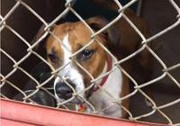 狗狗等待3年卻無人收養它,可它仍然努力訓練,只為爭取有個家