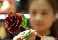 溫陽血脈金邊玫瑰