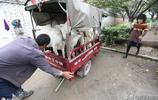 陝西農民做冷門生意,投資小見效快供不應求,每天可掙200多元