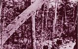 林業開拓團