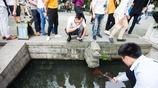 浙江杭州:西湖遊客現場捕魚,一下捕走五條,公園呼籲文明旅遊!