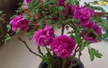 如果你喜歡養花,不如把這些盆栽帶回家,清新美觀又顯品味