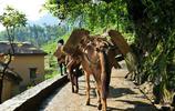 雲南大山中的貧困村:沒有路靠馬行,村民盼遊客來改變生活