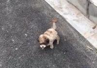 小奶狗見人就跑,女孩掏出吃的後,小傢伙竟放下高冷的姿態不走了