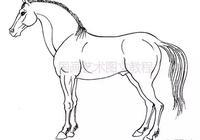 畫馬基礎:馬的運動規律,畫馬超級教程:徐悲鴻畫馬技法