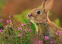 當動物親吻花朵,這是世界上最萌的照片!
