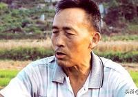 在田裡收麥的63歲農村大叔,談了當下農村年輕人都面臨的事實