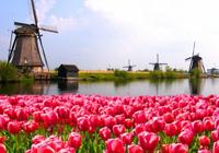 荷蘭ETF巨頭無視監管機構仍開展加密行動