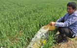 農村怪現象:小麥旱了為啥農民不澆,農業就是靠天吃飯,沒辦法?