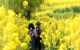 貴州黔西:春光無限好 賞花正當時