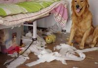 當狗子對你做出這些行為的時候,就說明它想你了