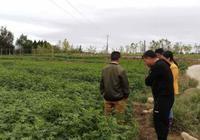 花椒聯盟,村民種植花椒年收入667萬元