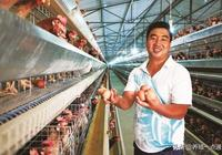 養雞減少飼料浪費,提高飼料轉化率十招