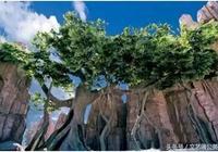 心理學:四棵菩提樹,你選哪一棵?測你今生會得到什麼善果!
