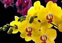 蝴蝶蘭花後怎麼養?這幾點最重要,快來了解下