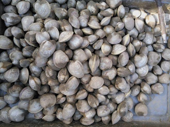 小鎮集市上賣一種河蚌一塊錢一斤,一種叫肉狗子的小魚你見過嗎?