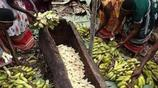 非洲的香蕉酒雖然好喝,但你看到釀製過程後,可能就不想喝了