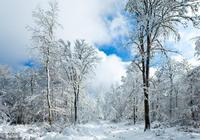 北京將迎最強降雪!雪後這三件事做起來