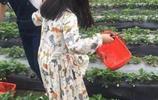 李湘的女兒王詩齡最近曝光,去摘草莓網友卻把重點放在她的腳上?