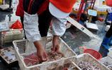 青島碼頭 純正本地小海鮮10塊錢一斤 海捕大蝦80一斤 可講價