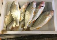 黃花魚怎麼做好吃?