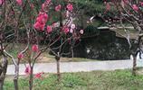 桃花朵朵開,美爆了,我在這兒等著你回來,看那桃花兒開