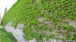 風水學講:這三種植物家裡萬萬不要放,否則黴運將來,一輩子難富