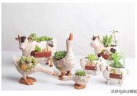 春天來了想種多肉,老司機告訴你先選好花盆很重要!