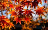 誰道西風能換物,染紅楓樹亦多情