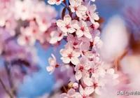三月,春光無限好,幸福正當時