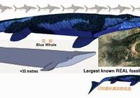 都說虎鯨群很凶猛,如果遠古時期的滄龍迴歸海洋,虎鯨會怕它嗎?