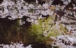 圖蟲風光攝影:季