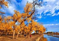 秋季攝影額濟納胡楊林最省錢的路線:嘉峪關-胡楊林-額濟納4日遊