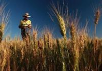 分析了美國農業合作社,我國合作社可以這樣走!