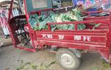 農村大叔的這顆花畝產5000斤,2畝地收入1.8萬元,把三輪車累壞了