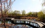 長春北湖國家溼地公園,耗資30億打造,成為人們休閒的好去處