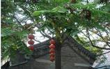 榮祿住宅北京老建築
