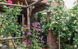 美麗鄉村的別墅太美了,主要是栽植了這種花卉,不想仿照嗎